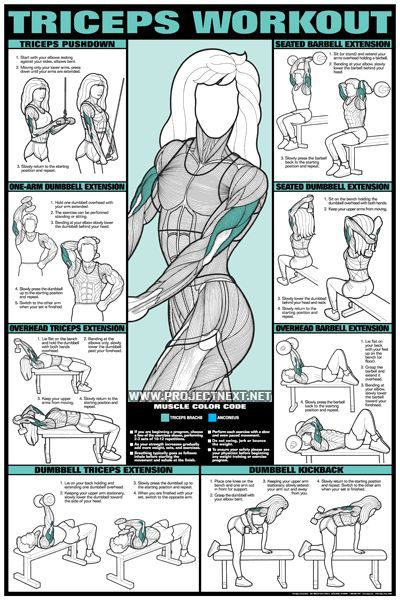 Triceps Workout for Women - Barbell Dumbbell Seated Exercise Gym