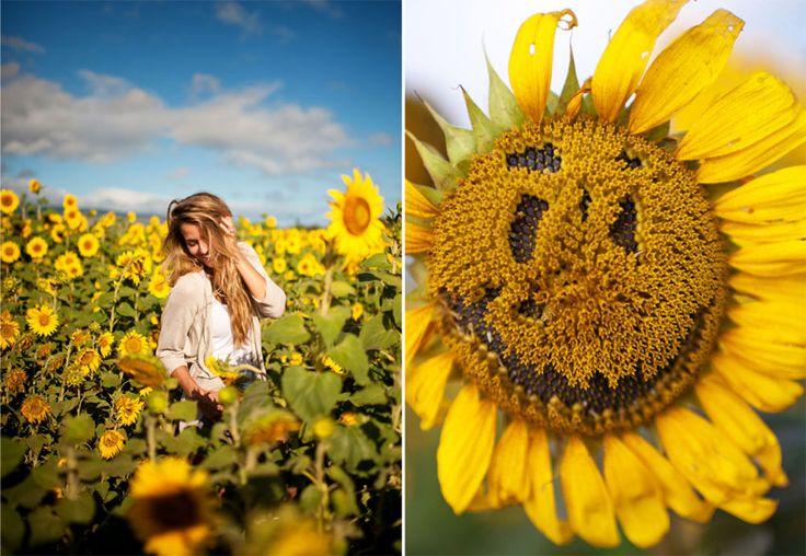 B : North Shore Sunflower Fields » Memories Aquatic  Oahu Sunflower Fields  Hawaii Sunflower Fields  Sunflowers Portraits Photography