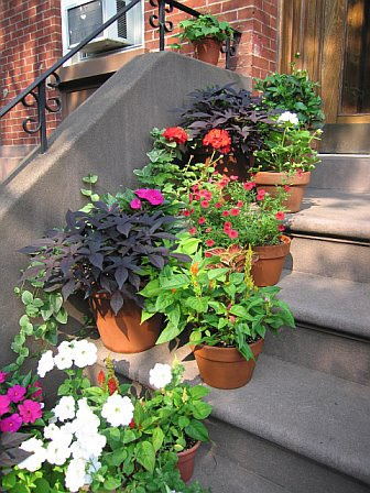 The Urban Gardener: Stoop Planters | Apartment Therapy