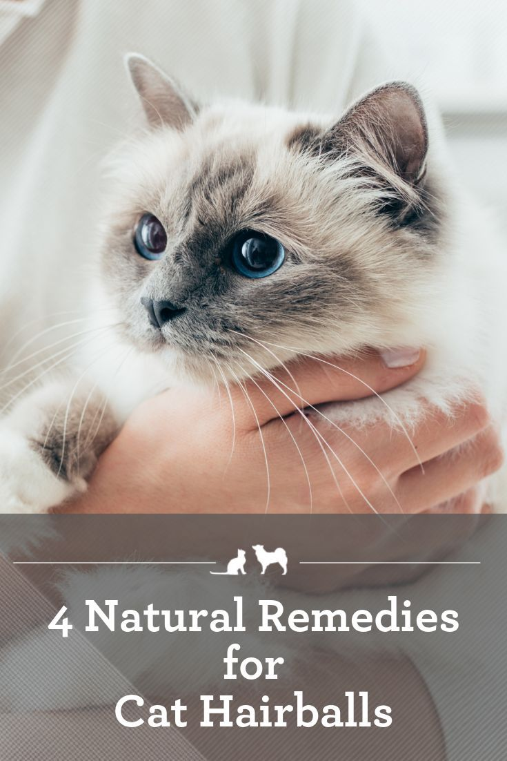 4 Natural Remedies For Hairballs In 2020 Cat Health Sick Cat Cats
