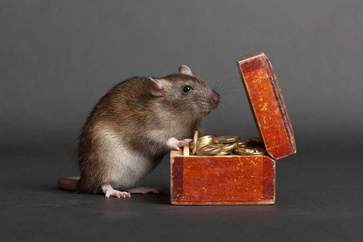 Mengenali penyebab korupsi dari perspektif sistem dan individu | Ruang Psikologi