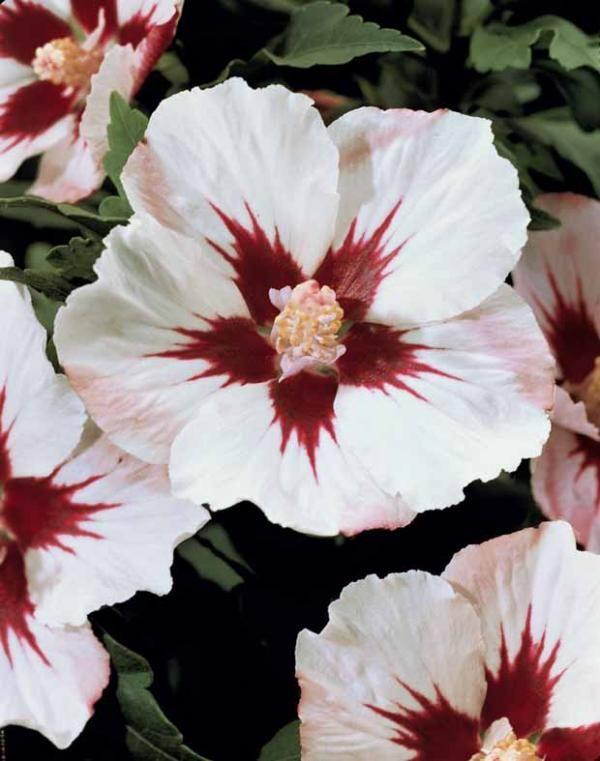 1000 Id Es Sur Le Th Me Tatouages De Fleurs De Marguerite
