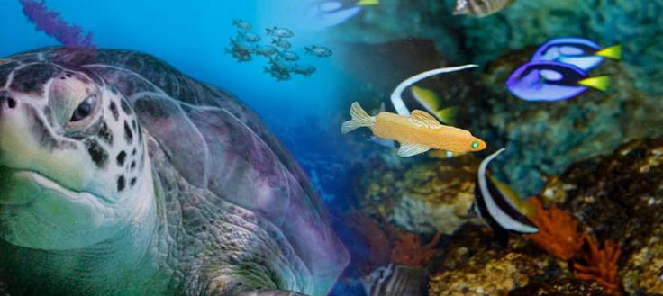 sea life images 2014 | Cheap Sea Life London Aquarium Tickets 2014 - Online Deals
