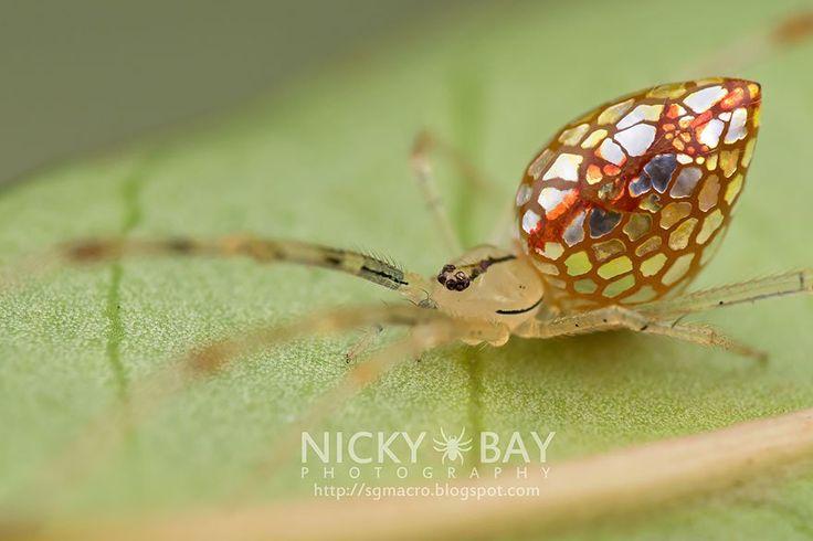 Des araignées merveilleuses recouvertes de miroirs, véritables reflets de la nature