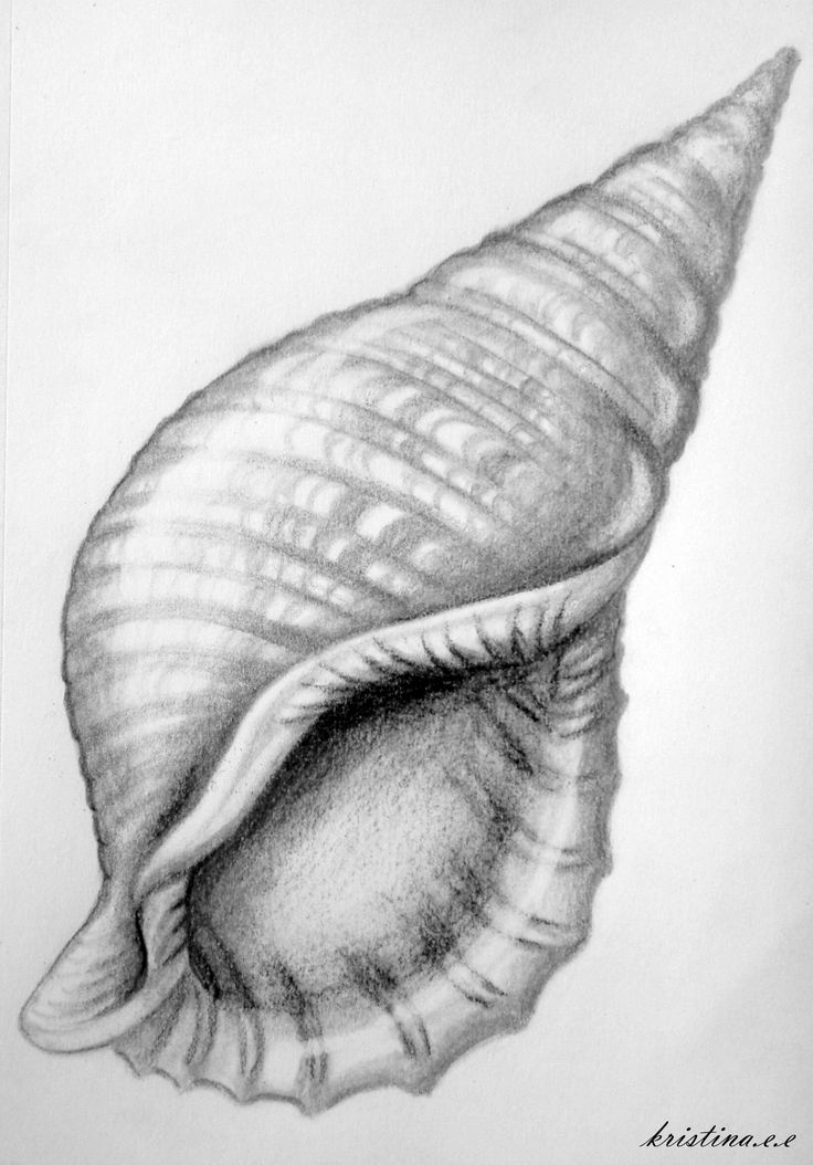 . the darker shading allows the viewer to feel that they can look into the inside of the shell. As your eye is drawn in deeper it gets darker.