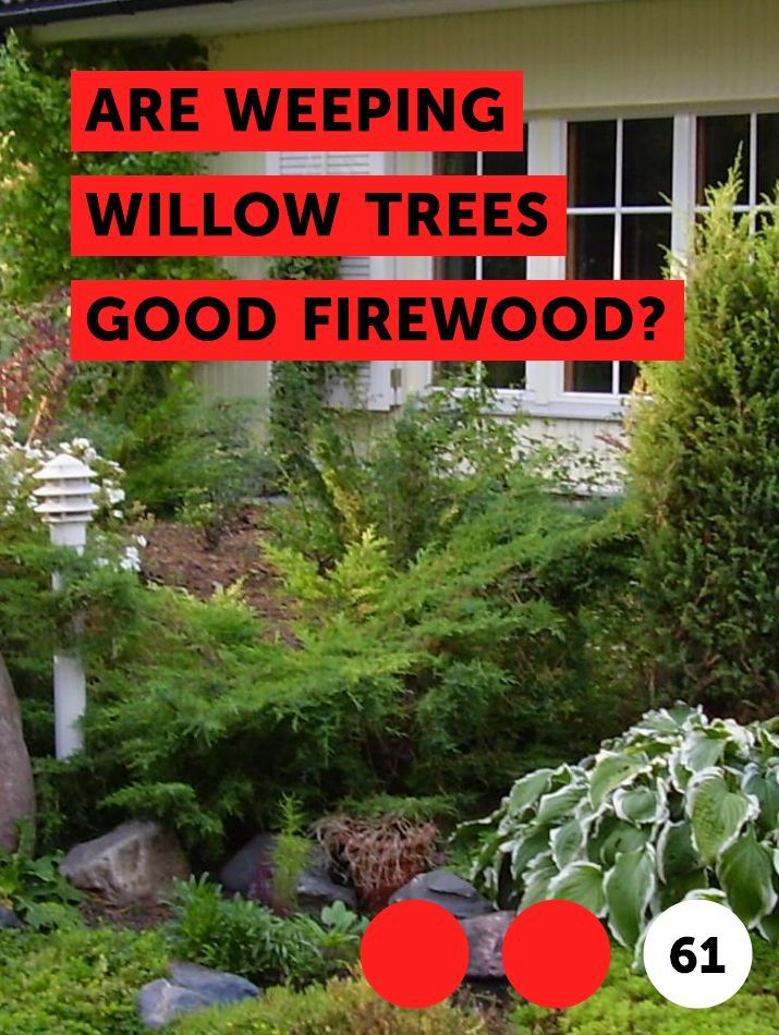 Are Weeping Willow Trees Good Firewood Dogwood