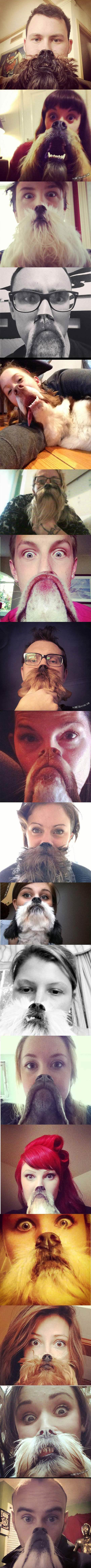 Some of the epic dog beards collection