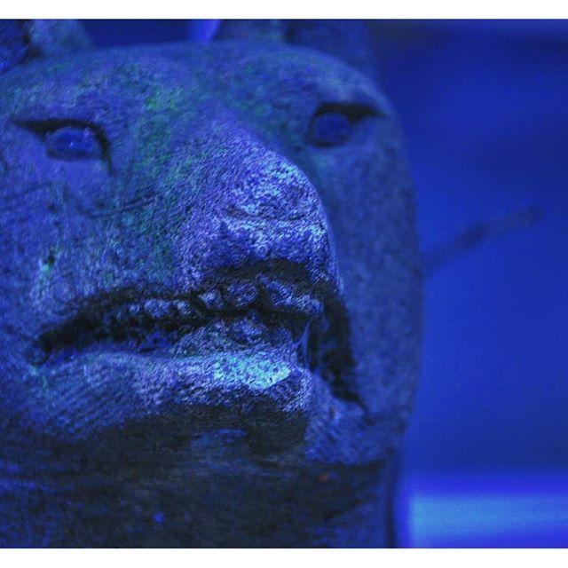 子安神社の末社の一つに子安稲荷神社があります。眷属である狐の早朝の表情は険しく見えます。  #八王子#安産#安産祈願#安産の神様#子安神社#戌の日#帯祝い#戌#お宮参り#安産のお守り#安産の願い#神社#御朱印#ご朱印#木花開耶姫命#神社仏閣巡り#神道#朱印#神社巡り #稲荷神社 #お稲荷さん #お稲荷様 #狐 #キツネ #眷属 koyasujinja  子安神社(八王子)