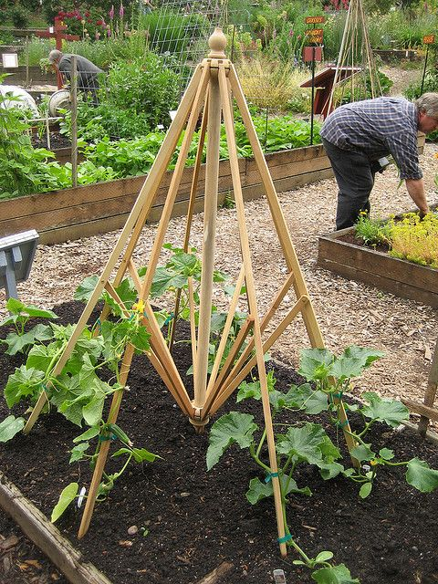 Recycled [porch/picnic table] Umbrella frame finds new life in the cucumber bed as a trellis- HÓrta