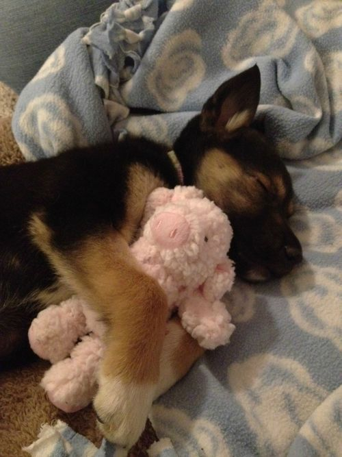 Just cuddling with his favorite toy. - Imgur