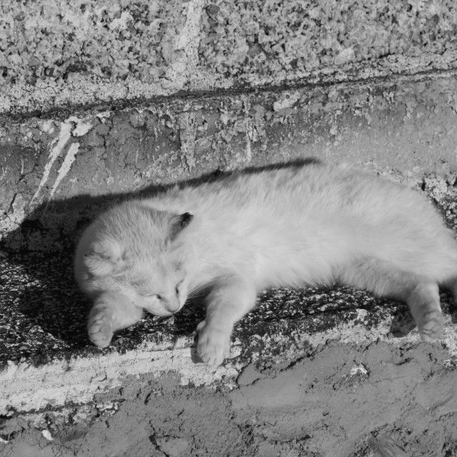 just a monochrome sleepy cat. Subscription-free stock image available for license.