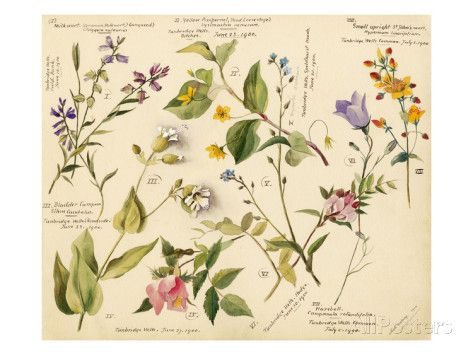 Wild flowers composite Giclee Print by Lilian Snelling - AllPosters.co.uk