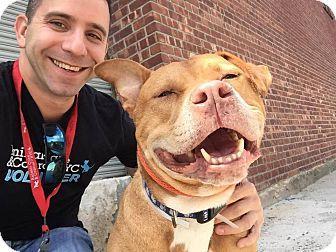 """New York, NY - Pit Bull Terrier Mix. Meet Rocky, a dog for adoption. http://www.adoptapet.com/pet/14220167-new-york-new-york-pit-bull-terrier-mix """"I'm a happy boy.  Let's be happy together my friend."""""""