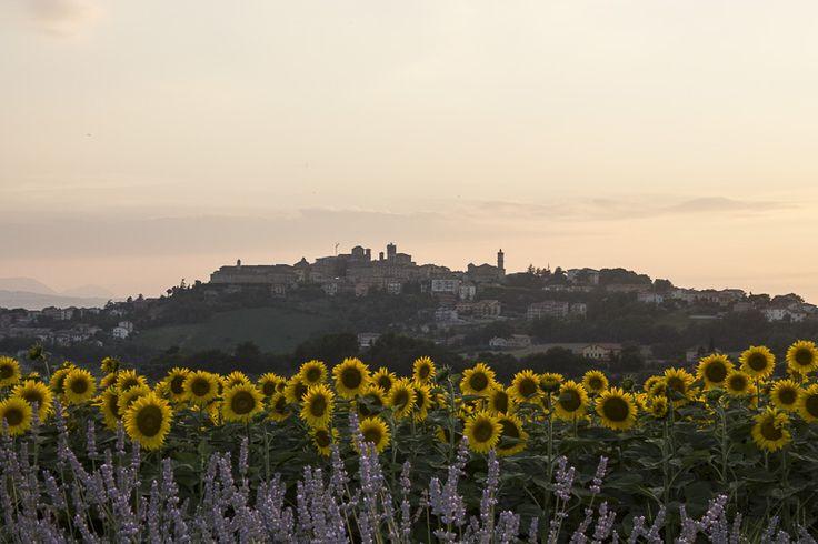 Filottrano View from Ca'Vecchia Beerstrot