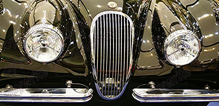 Jaguar Print available on canvas by CJ Collections