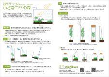 小さなコケの森 育て方 | 道草 苔(こけ)・テラリウム・苔玉の企画販売