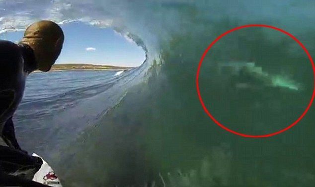 Kelly Slater posts video riding a wave close to a great white ...