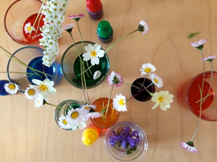 schaeresteipapier: Experiment mit Blumen und Farbe