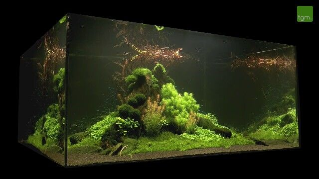 ... aquascaping 1year tgm aquarium fish aquascaping inspiration forward