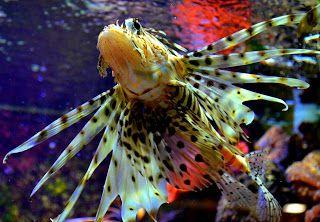 ps-pictureshop: Salzwasserfische, Saltwater fish, Poissons d'eau d...