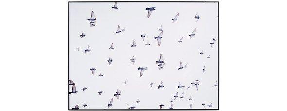 Fantastyczne fotografie i szkło artystyczne od BoConcept