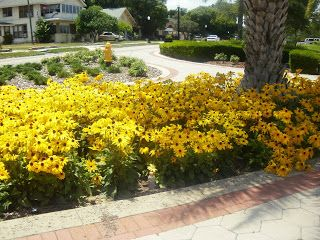 17 best images about easy florida plants on pinterest for Easy maintenance flower beds