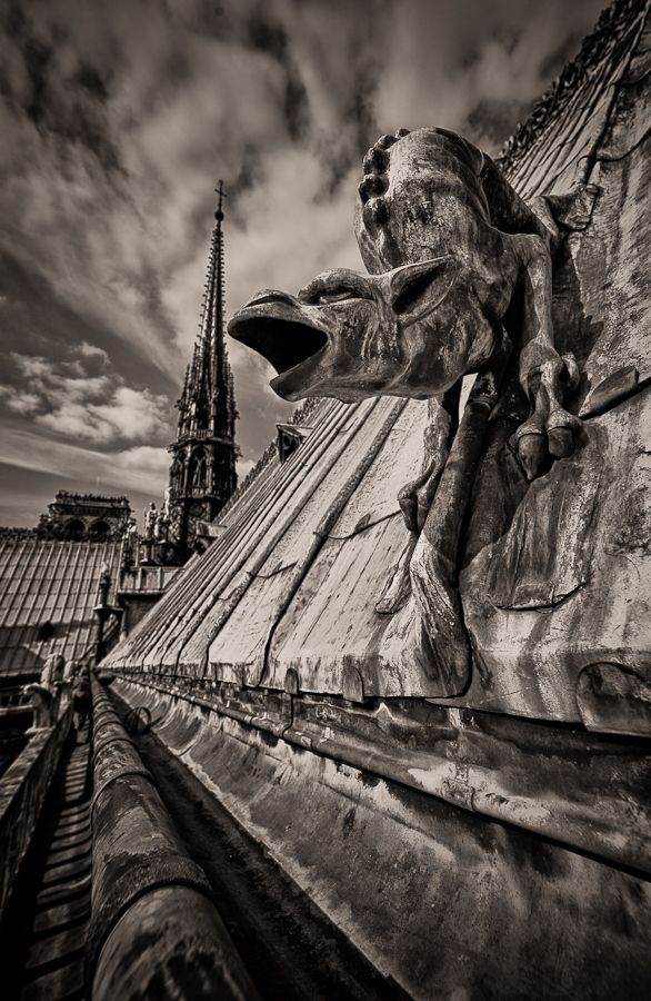 Gargoyle on the roof of Notre Dame de Paris  by herve bourderon on 500px