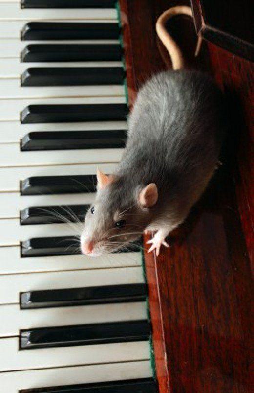 мышка на пианино картинки вот пояс хакасов