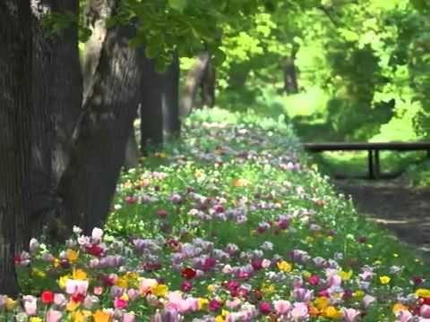 Шопен Фредерик - вальс №7 до-диез минор, Op.64 №2 + Marriage D'amour/ Весенний Вальс/ Мелодия Рая - YouTube