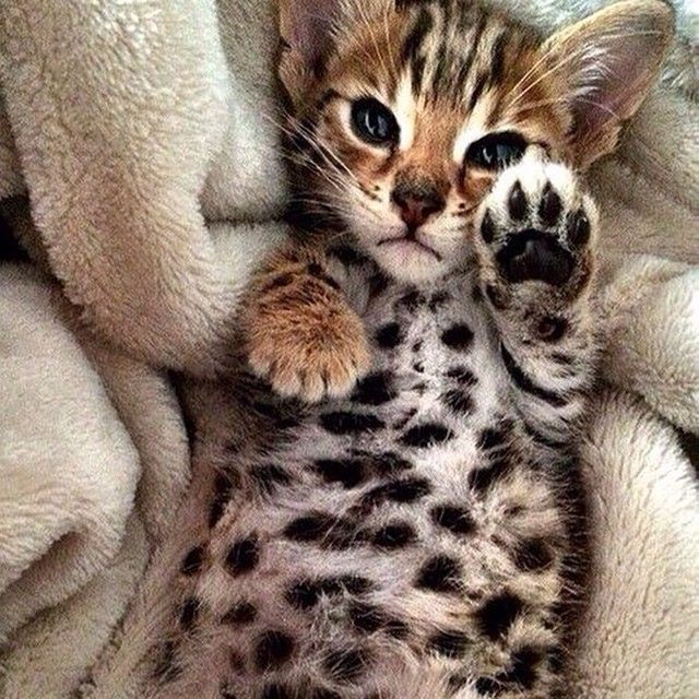 Talk to the paw cause the face ain't listening!