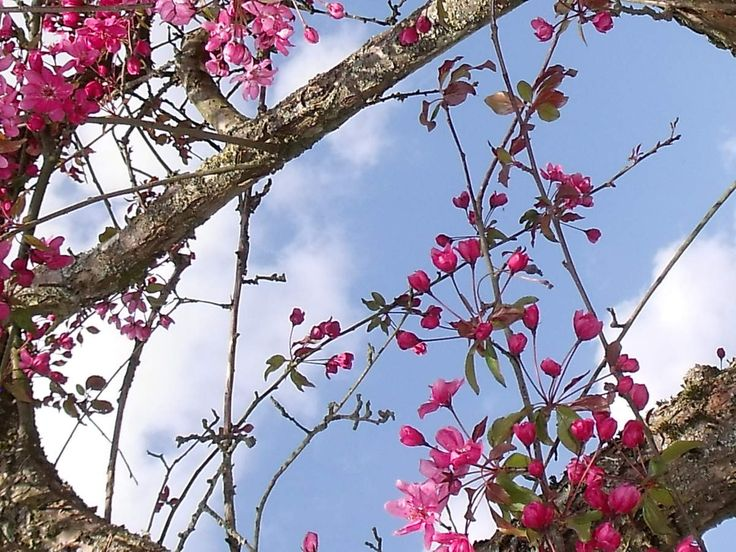 """""""Voici un nouveau printemps. Dans l'air immobile, il m'atteint par rafales. Il me donne et me retire force et espoir. Subtil ou pesant, il s'insinue jusque dans la moëlle des os. Il suffit d'une parcelle de printemps mêlée à l'air..."""