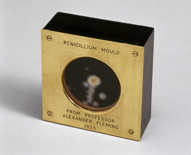 Penicillium mould presented by Alexander Fleming, 1935
