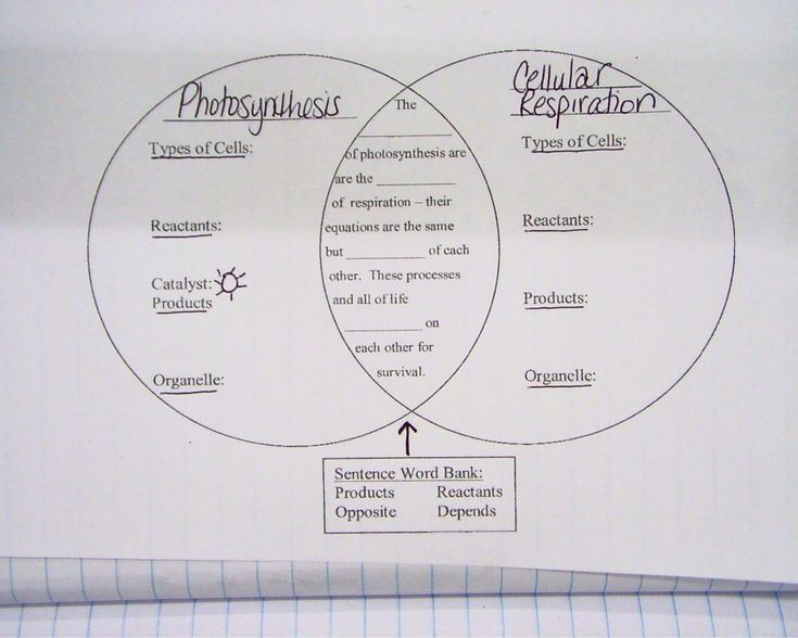 56 best images about Photosynthesis/Cell Respiration on Pinterest ...