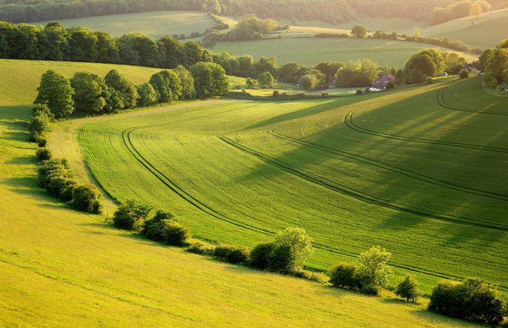 https://flic.kr/p/vJJnEt | South Downs National Park | © 2015 Alan Mackenzie.  www.alanmackenziephotography.com  Facebook  This scene is situated in a very attractive corner of the South Downs. In contrast to the many wildlife deserts across the Downs, farming practices encourage wildlife to thrive. Visitors will observe Common buzzards, field mice, bats, owls, Roe deer and several butterfly species.