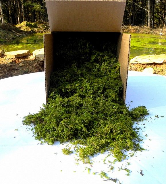 "Good to know - you can buy moss in bulk online lol!!! ""BULK Moss Preserved box filled with no less than 24 Oz ,Sphagnum Moss- Wedding Decor,Basket filler,woodland moss-Preserved moss for baskets. $25.00, via Etsy."""