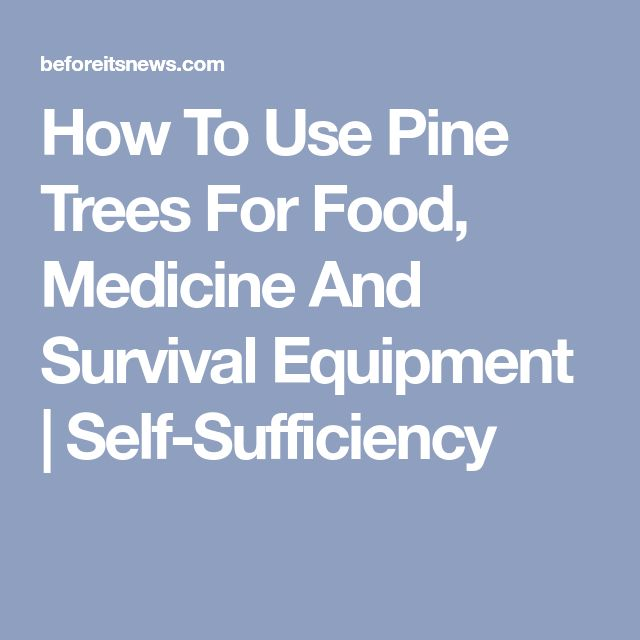 How To Use Pine Trees For Food, Medicine And Survival Equipment | Self-Sufficiency