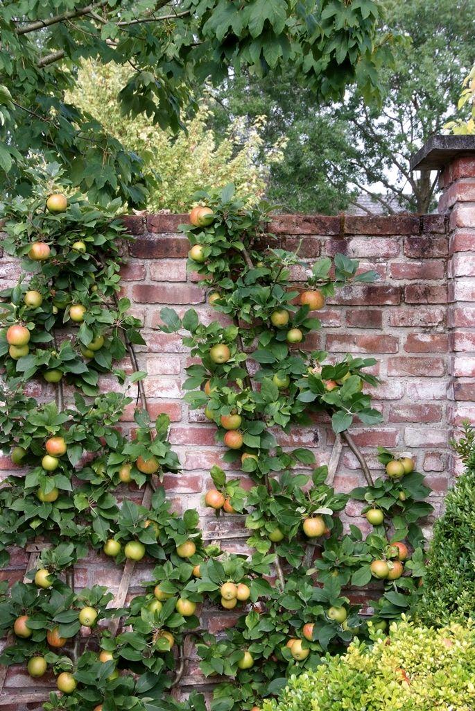 Interieur Inspiratie Tuinplant van de Maand augustus: fruitboom | Interieur Inspiratie