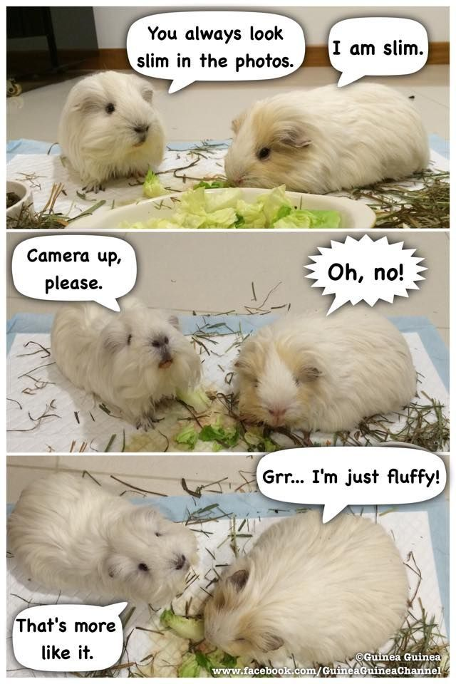 Haha. I bet this is what my guinea pig thinks when I take his picture.