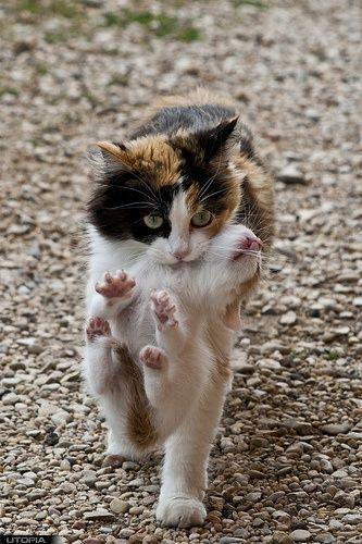 mama kitty carrying baby