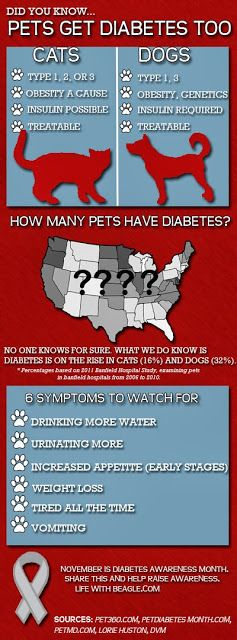 Life With Beagle: Diabetes in dogs and cats: Wading through the science