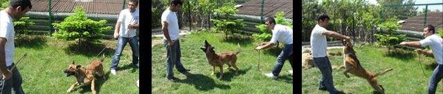 Profesyonel köpek eğitimi