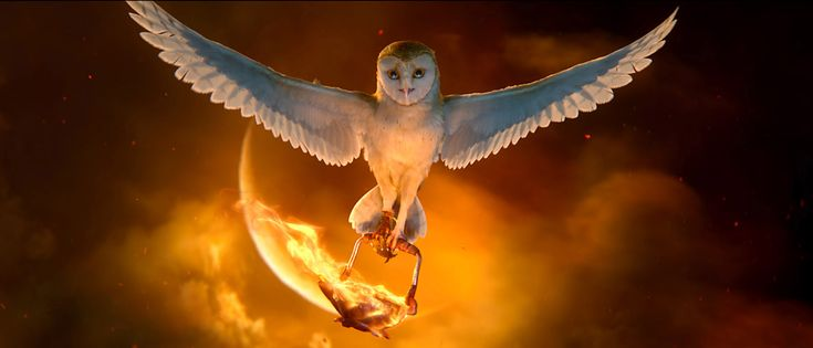 legend of the guardians owl images | LEGEND OF THE GUARDIANS: THE OWLS OF GA'HOOLE |HD Wallpapers Fan ...