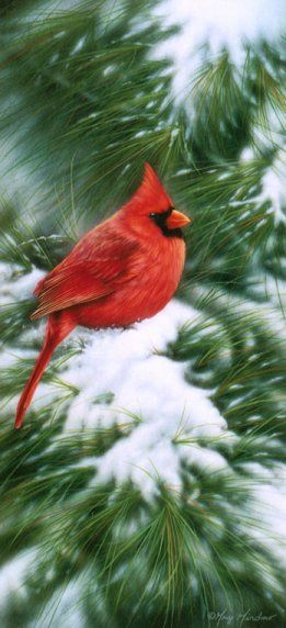 Winter Cardinal - by Greg Giordano - from Belles illustrations /oiseaux