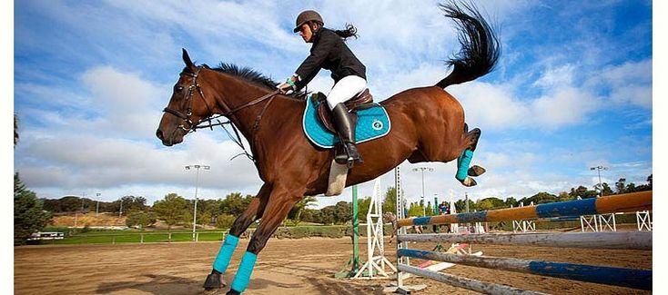 Horse Training Los Navazuelos In Majadahonda Libro De Visitas