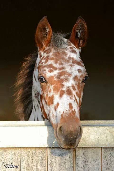 Love the freckles.  Appaloosa foal