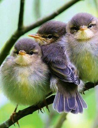 Beautiful baby birds