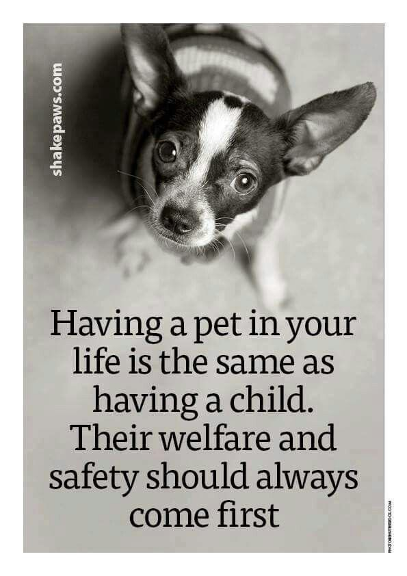 Pets are like children