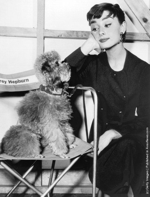 Film actress Audrey Hepburn (1929–1993) on a film set with her pet poodle, circa 1960. (Photo by Hulton Archive/Getty Images)