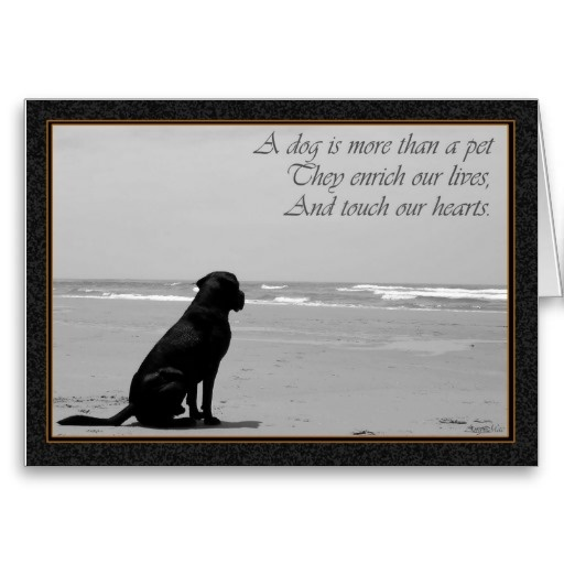 Sympathy Dog Quotes: 32 Best Sorry For Your Loss Images On Pinterest