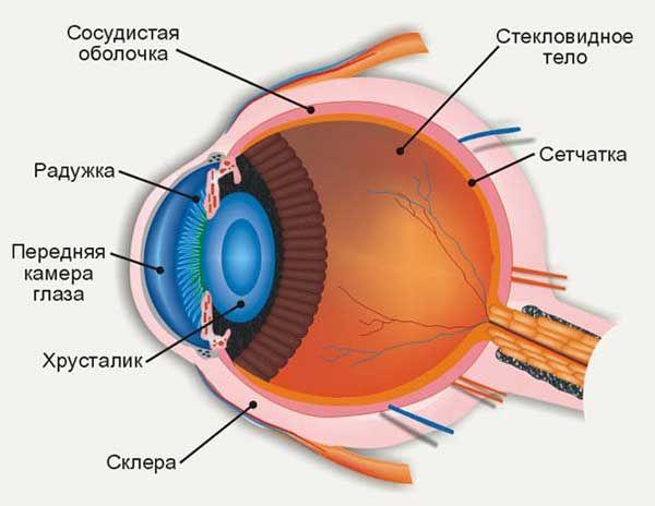 Как укрепить сетчатку глаза
